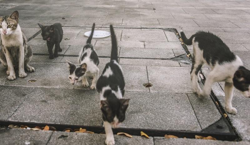 animais-de-rua-um-problema-que-demanda-participacao-coletiva