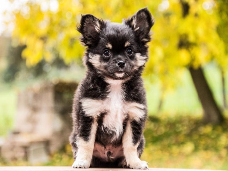 100 fotos fofas de filhotes de cachorros para animar seu dia