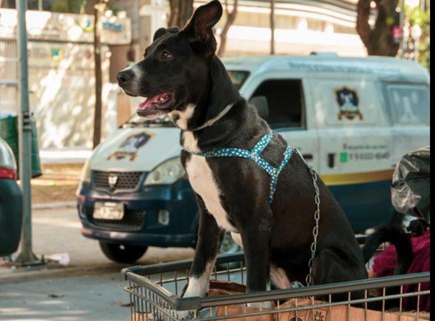 ONG MRSC – Moradores de Rua e Seus Cães realiza Campanha do Agasalho; veja como ajudar