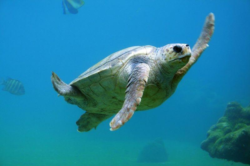 preservação do oceano