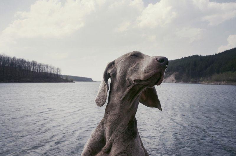 Pets: 4 maneiras de mudar o comportamento canino – para melhor, claro