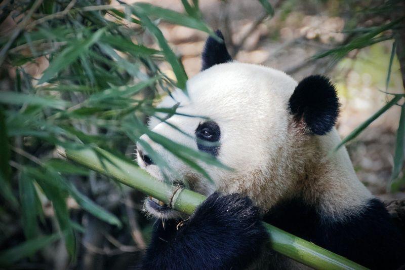 Alerta: ONG WWF-Brasil não tem app de adoção de animais