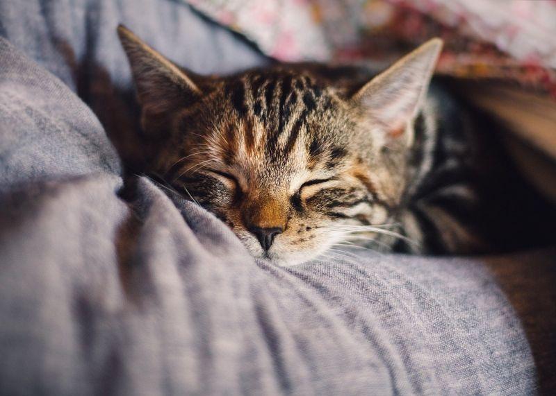 Qualidade do sono pode ser melhorada de acordo com colchão e rotina