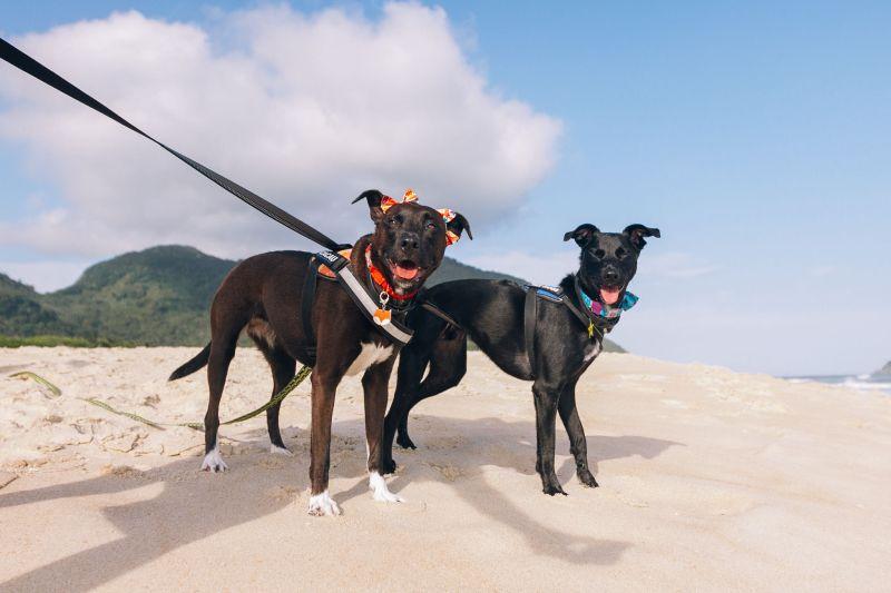 Dia do Vira-Lata: conheça cães que viraram influenciadores