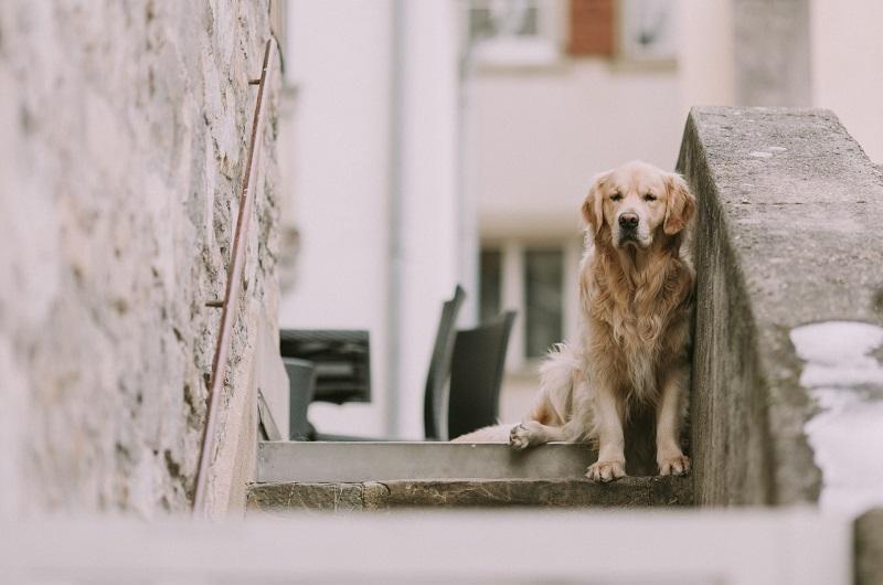 osteoartrite-canina
