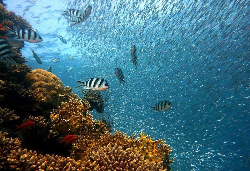 5 atitudes que ajudam a preservar os oceanos